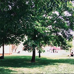 Jardin Raymond IV